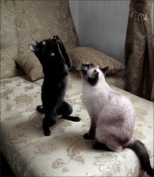 Смешные котята: www.aseeva2007.narod.ru/photoalbum6.html